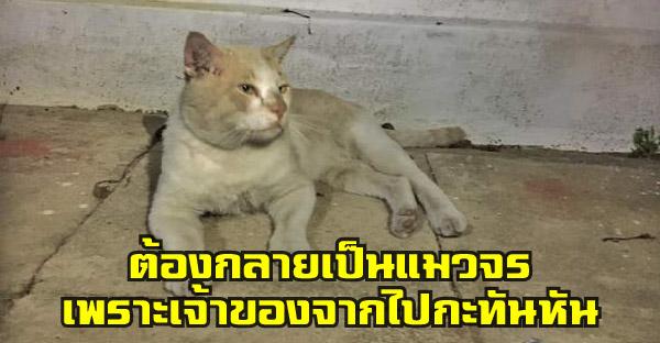 หาบ้านให้เจ้า 'เหลือง' อดีตเคยมีเจ้าของ แต่ต้องกลายเป็นแมวจร หลังเจ้าของจากไปอย่างกะทันหัน