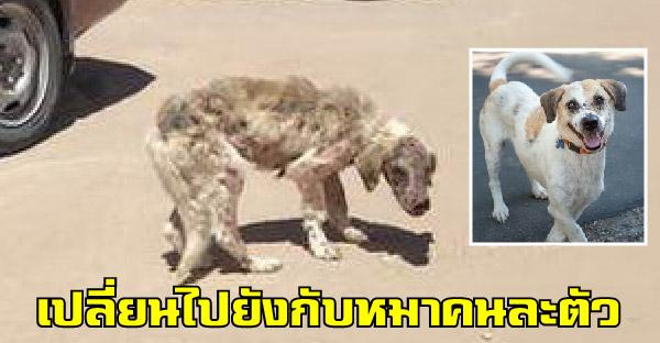 คนใจดีช่วยชีวิตสุนัขข้างถนนที่เดินยังแทบไม่ไหว ให้กลับมาแข็งแรงและมีรอยยิ้มบนใบหน้าได้อีกครั้ง
