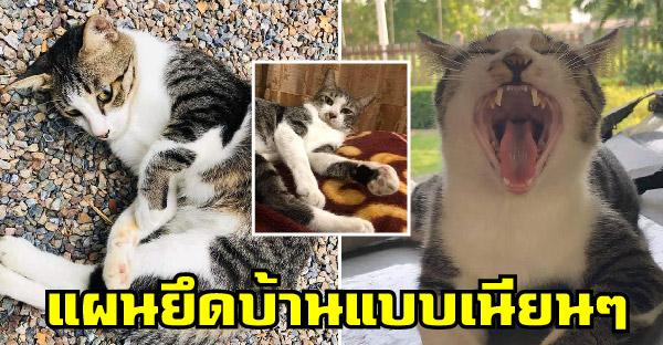 แมวจรแอบเนียนอยู่ข้างบ้าน ก่อนจะค่อยๆขยับเข้ามายึดบ้านหมดทั้งหลัง แม้หัวทาสนางก็เหยียบเล่นได้