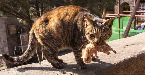 แม่แมวคาบลูกวิ่งหาคนช่วยลูกตัวน้อย หลังถูกเอามาปล่อยไว้ และทุกอย่างสายเกินไปแล้ว