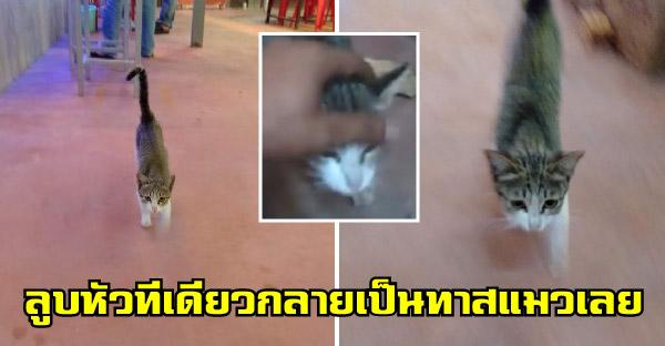 หนุ่มลูบหัวลูกแมวที่ร้านตกกุ้งไปทีเดียว น้องวิ่งตามไม่หยุด จนต้องอุ้มกลับบ้านไปเลี้ยง