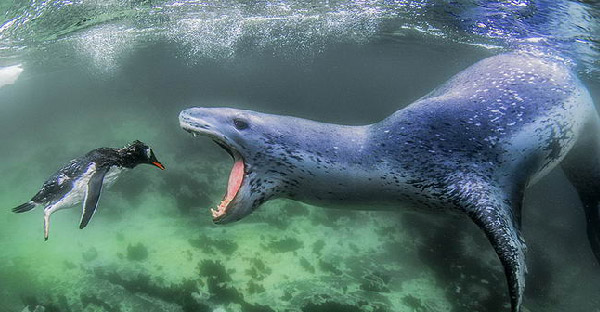 20 ภาพสัตว์โลกกับธรรมชาติยอดเยี่ยม จากการประกวดระดับนานาชาติ