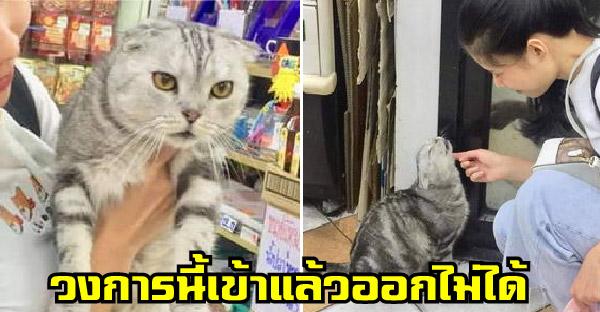 สาวขอวิธีออกจากวงการทาสแมว หลังเจอแมวดักจนไปเรียนสายเกือบทุกวัน