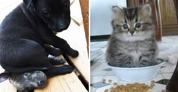 มัดรวมท่านั่งหมา-แมวสุดอินดี้ ตรรกะยากที่จะทำความเข้าใจได้