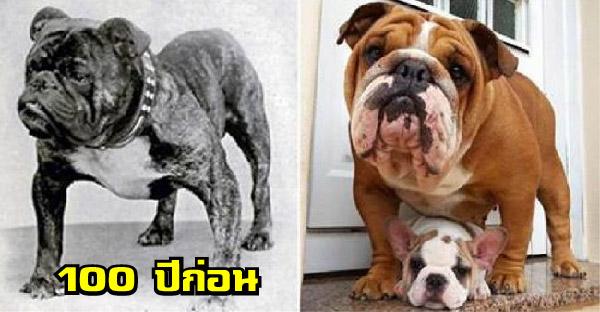 ผ่านมาหนึ่งร้อยปีสุนัขแต่ละสายพันธุ์ เปลี่ยนแปลงจากเดิมขนาดไหน