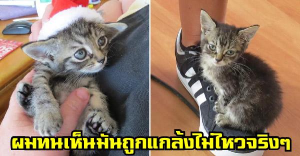 หนุ่มใหญ่น้ำตาคลอ หลังเจอลูกแมวตัวจิ๋วถูกแกล้ง ก่อนส่งตัวให้กู้ภัยสัตว์พร้อมเงินอีกสามพันเป็นค่ารักษา