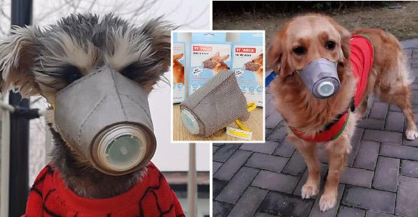 คนจีนเริ่มสวมหน้ากากอนามัยให้น้องหมา หวั่นไวรัสโคโรน่าด้วยเช่นกัน