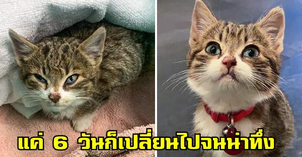 24 อดีตสัตว์เลี้ยงที่ถูกหมางเมินจนมีสายตาสุดเศร้า ก่อนได้รับการช่วยเหลือจนกลับมามีรอยยิ้มบนใบหน้าได้อีกครั้ง