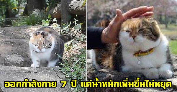 เจ้าของพาแมวเดินขึ้นเขาตลอด 7 ปี หวังช่วยฟิตหุ่นให้ แต่น้ำหนักกลับพุ่งพรวดขึ้นเรื่อยๆแทน