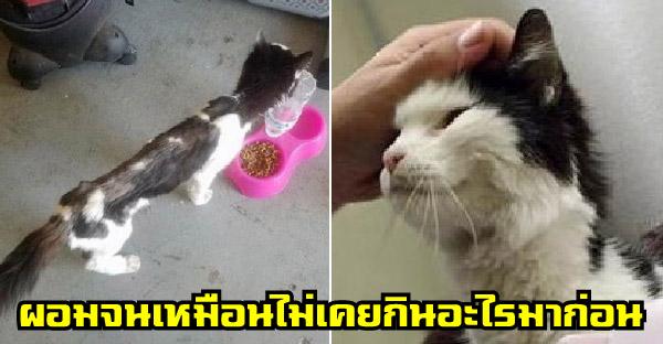 แมวจรข้างถนนผอมจนเห็นกระดูก เหมือนไม่เคยกินอะไรมาก่อนในชีวิต ก่อนจะถูกช่วยเหลือและมันก็ยิ้มไม่หุบ