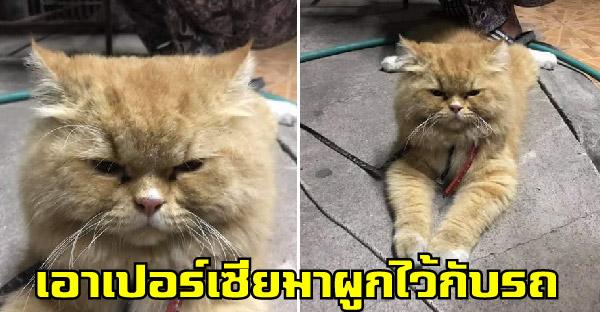 พลเมืองดีประกาศตามหาเจ้าของแมว หลังพบเปอร์เซียผูกไว้กับรถกลางดึก