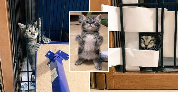 มิ้วน้อยซนจัดจนทาสแมวจับแยกกรง ถึงฤทธิ์เยอะแต่ก็น่ารักจนยิ้มไม่หุบ