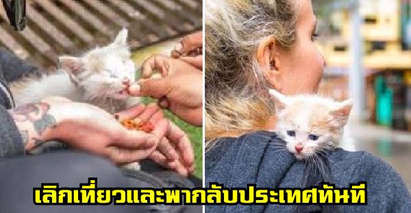 สาวเจอลูกแมวบาดเจ็บข้างถนน จึงตัดสินใจเลิกเที่ยว และพาตัวกลับประเทศทันที