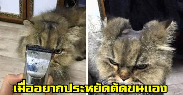 เมื่อเจ้าของอยากประหยัดตัดขนแมวเอง จึงกลายเป็นทรงฮาๆให้ขำกันเพียบ