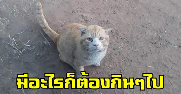 เจ้าของรับจ้างเลี้ยงวัวได้วันละร้อย จนต้องใช้ข้าวคลุกน้ำปลาเลี้ยงแมว ด้านชาวเนตแห่ช่วยส่งอาหารให้