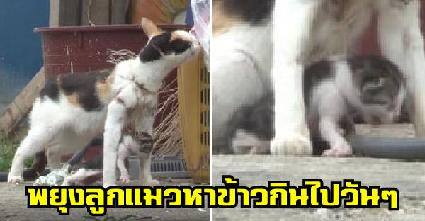 แม่แมวกับลูกน้อยติดอวนจับปลา ชาวบ้านสุดสงสาร เรียกทีมกู้ภัยมาช่วยชีวิตด่วน