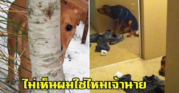 12 หมาต๊องที่พยายามซ่อนแอบเพราะไม่อยากไปหาหมอ แต่กลับดูไม่เนียนเอาซะเลย