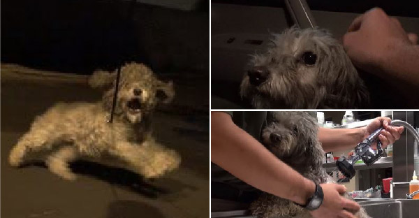 กู้ภัยสัตว์เฝ้าทั้งคืนเพื่อซื้อใจสุนัขจรจัดขี้กลัว และเปลี่ยนชีวิตจนได้บ้านที่อบอุ่นอย่างแท้จริง