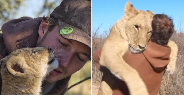 ชายหนุ่มช่วยชีวิตสิงโตตั้งแต่แบเบาะ จนมันคิดว่าเขาคือพ่อแท้ๆ