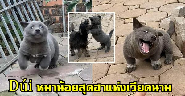 รู้จัก Dúi หมาน้อยสุดฮาแห่งเวียดนาม ที่หลายคนเคยเห็น แต่ไม่เคยได้รู้จัก
