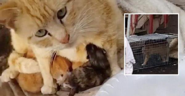 แม่แมวเอาตัวบังฝนให้ลูกๆอบอุ่น จนกระทั่งมีคนใจดีมาช่วยชีวิตเอาไว้