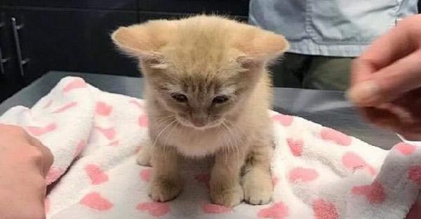 ลูกแมวส้มถูกช่วยจากข้างถนน นั่งคอตก ไม่กล้าสบสายตา ก่อนจะหายดีกลับมาซ่าได้อีกครั้ง