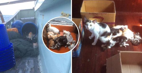 แม่แมวแอบขึ้นไปคลอดลูกบนเรือประมง โชคดีไต๋เรือเป็นทาสแมว น้องๆจึงอ้วนตุ๊บทุกตัว