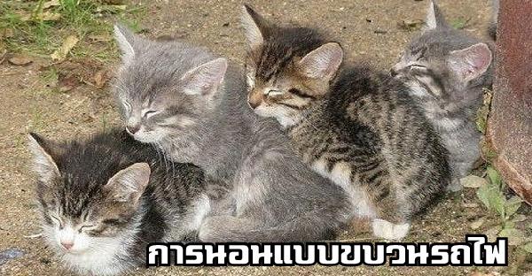 20 ท่านอนน่ารักๆของสัตว์โลกตัวน้อย ที่จะทำให้พวกเรายิ้มได้