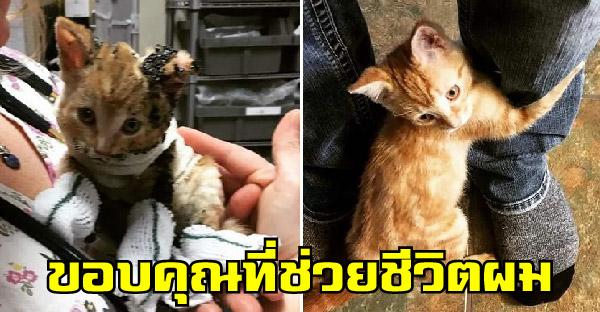 ลูกแมวกอดมนุษย์ไม่ปล่อย หลังพวกเขาช่วยชีวิตมันจากเหตุการณ์ไฟไหม้