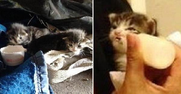 ลูกแมวกำพร้าสองตัวกลิ้งจากพุ่มไม้ มาเจอพลเมืองดี และชีวิตพวกมันก็เปลี่ยนไปตลอดกาล