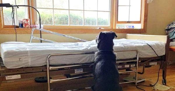 สุนัขผู้ซื่อสัตย์เฝ้ามองเตียงว่างเปล่า หลังเจ้าของจากไปอย่างไม่มีวันกลับ