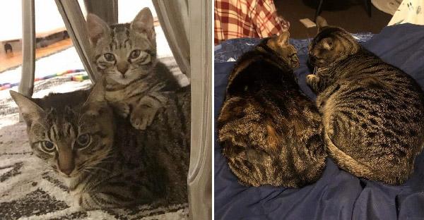 ลูกแมวจรจัดช่วยเปิดหัวใจแมวโดดเดี่ยว ให้มีเพื่อนเป็นครั้งแรกในชีวิต
