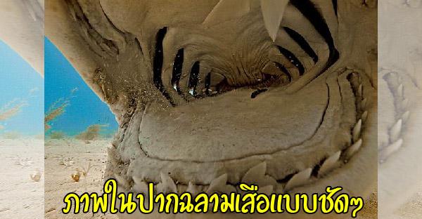 ส่องภาพเด็ดๆของฉลามแบบไม่มีตัดต่อจาก National Geographic