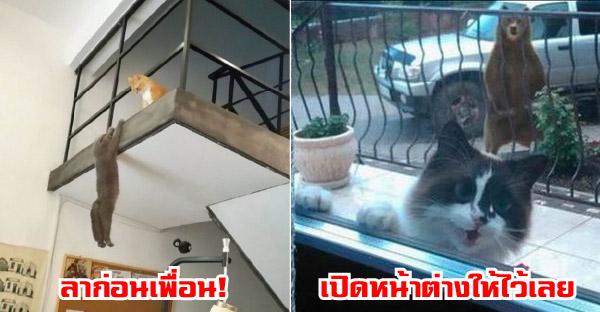 20 ภาพสุดฮาของแมวเหมียว ที่ขำกันสนั่นโลกออนไลน์
