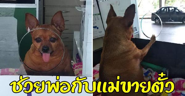 คู่รักรับสุนัขไร้บ้านมาเลี้ยง และไม่อยากปล่อยไว้บ้านลำพัง จึงพามาช่วยขายตั๋วจนลูกค้าติดหนึบ