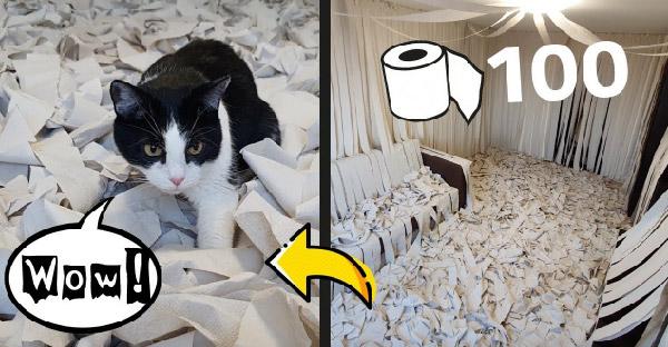 หนุ่มสร้างห้องที่เต็มไปด้วยกระดาษชำระ 100 ม้วน เพื่อดูว่าแมวจะเล่นได้สนุกสุดเหวี่ยงขนาดไหน