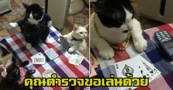 เรื่องของ เฮงเฮงแมวเทพ กับเหตุการณ์ตำรวจลงวงป๊อกเด้ง ที่ตอนจบหักมุมฮากระจาย