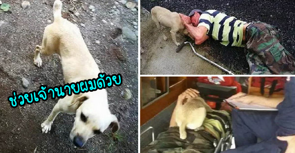 สุนัขแสนรู้นำทางคนแปลกหน้าไปช่วยเจ้าของที่นอนบาดเจ็บ จนสามารถส่งตัวไปโรงพยาบาลได้ทันเวลา