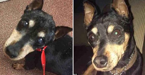 เจ้าของตัดสินใจการุณยฆาตสุนัขป่วย แต่ทีมสัตว์แพทย์สงสารเลยขอช่วยไว้เอง