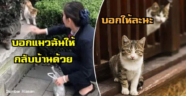 ชาวญี่ปุ่นเผยวิธีบอกแมวจรให้พาแมวหายกลับบ้าน ได้ผลจริงมาหลายเคสแล้ว