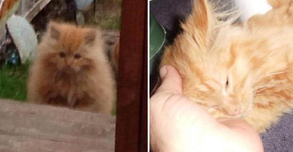 ชายหนุ่มเจอลูกแมวจ้องตาที่สวนหลังบ้าน ก่อนจะวางกับดักจับมาอยู่ด้วยกันได้สำเร็จ