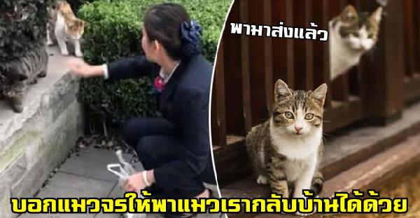 ชาวญี่ปุ่นยืนยัน วิธีฝากแมวจรให้พาแมวเรากลับบ้าน ใช้ได้ผลจริงหลายคนแล้ว