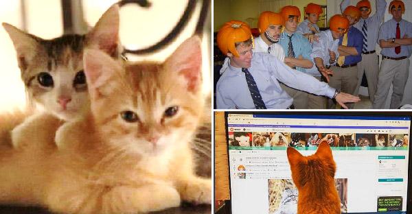 บริษัทจัดปาร์ตี้แหวกแนว และเริ่มต้นเลี้ยงแมว 2 ตัวในออฟฟิต ด้านพนักงานก็เห็นดีเห็นงามด้วย