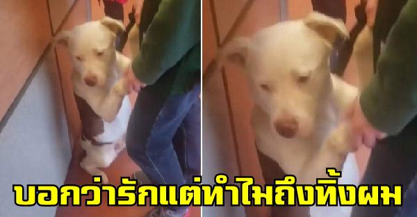 พิตต์บูลถูกส่งตัวไปยังศูนย์พักพิงสัตว์ และพยายามขอร้องเจ้าของให้พามันกลับบ้าน