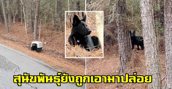 เยอรมันเชพเพิร์ดถูกพบข้างถนน ใกล้กับศูนย์รับเลี้ยงสุนัข คาดอาจถูกเอามาปล่อยไว้