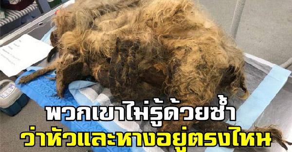 สุนัขตัวน้อยถูกพบในบ้านเจ้าของที่เสียชีวิต กับขนรุงรังที่ไม่รู้ว่ามีชีวิตอยู่มาได้ยังไง