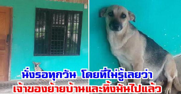 แม่หมาท้องแก่นั่งรอเจ้าของที่บ้านทุกวัน โดยที่ไม่รู้เลยว่าพวกเขาย้ายบ้านไปแล้ว