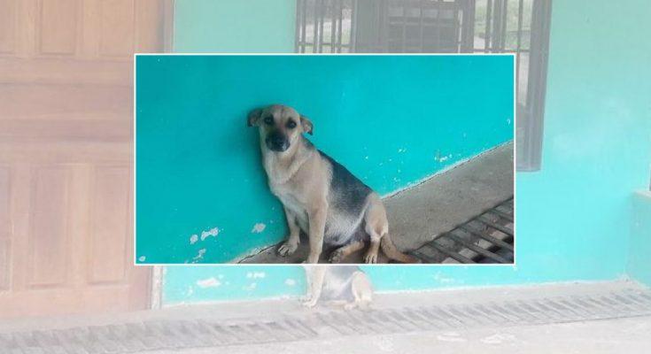 แม่หมาท้องแก่นั่งรอเจ้าของทุกวัน หลังพวกเขาย้ายบ้านและปล่อยมันไว้เบื้องหลัง
