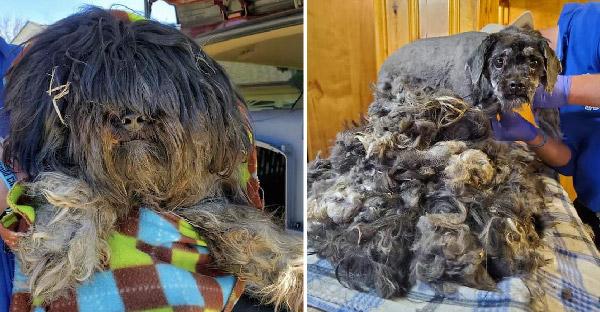สุนัขขนรุงรังเร่ร่อนไม่มีคนสนใจ จนไปถึงระเบียงบ้านของคนใจดี ชีวิตมันก็เปลี่ยนไปตลอดกาล
