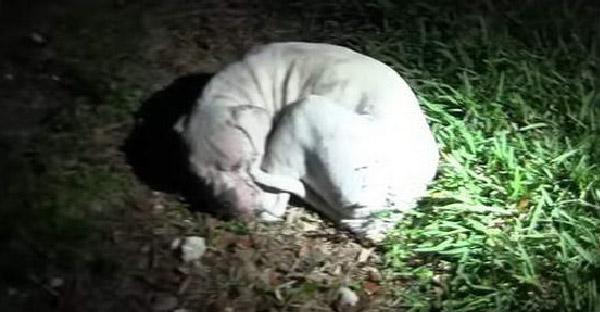 สุนัขผอมแห้งนอนขดตัวอยู่ในทุ่งร้าง รอคอยเพียงใครซักคนที่จะไม่ทิ้งเหมือนเจ้าของเก่า